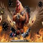 Taruhan Bandar Sabung Ayam